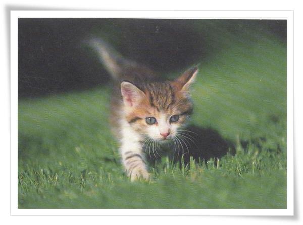 cz cat