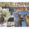 CA wildlife1