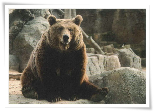 bear symbol in RU