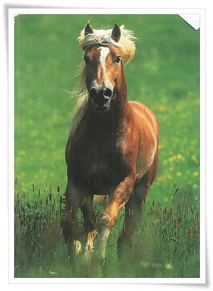 DE horse