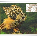 eagel owl1