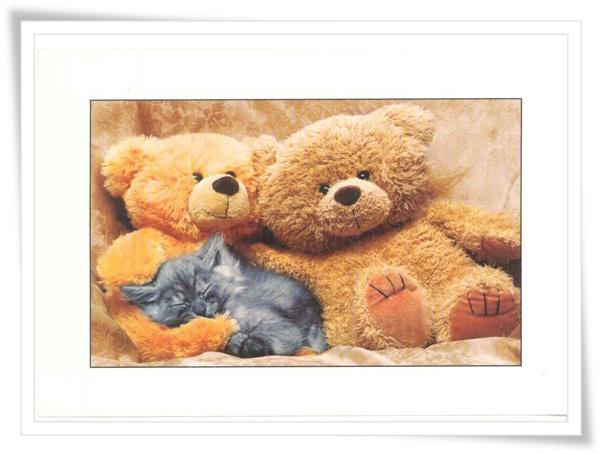 bears NL