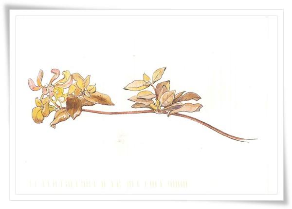flower.US