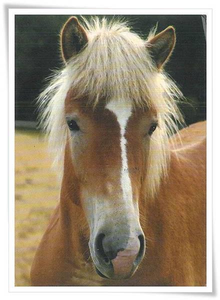 horse FI