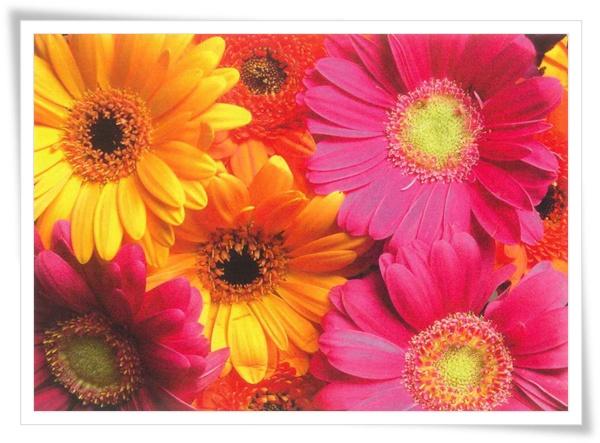 BE flower