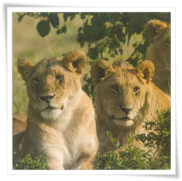 RU lion