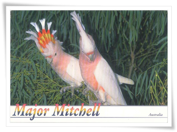 major mitchell