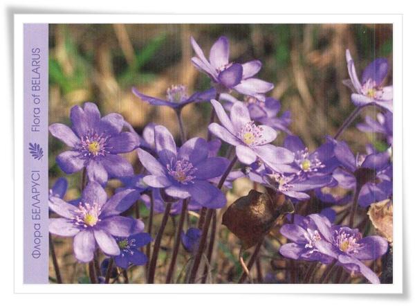 flora of belarus_BY.jpg