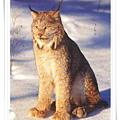 big cats.jpg