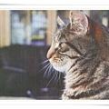 cat seeing_CN.jpg