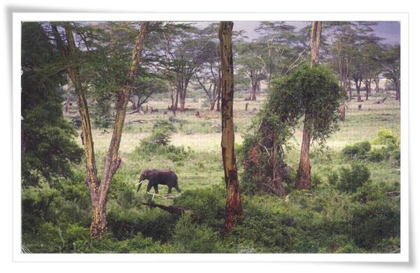 tznzania elephant.jpg