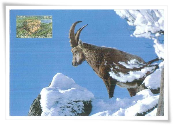 wild goat1.jpg
