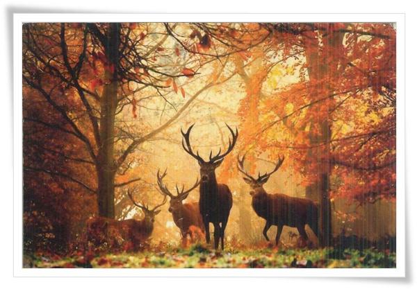 UA_deer.jpg