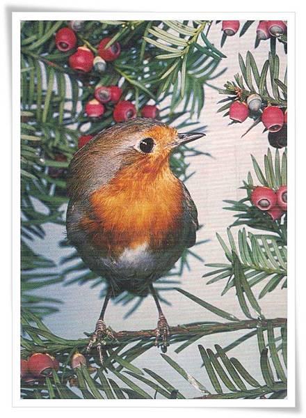 NL bird.jpg