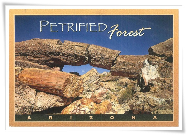 petrified forest.jpg