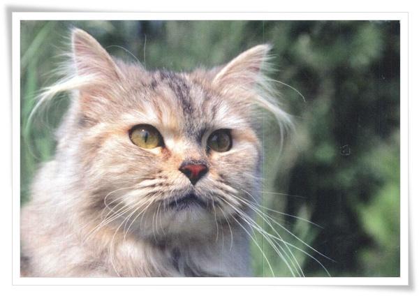 DE_cat_.jpg