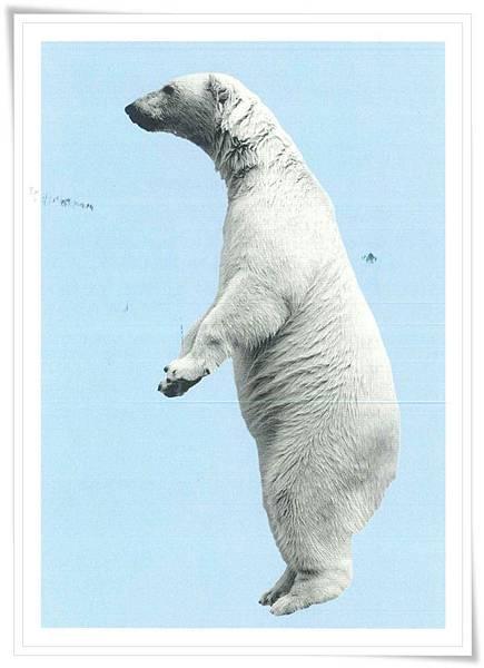 NL_polar bear.jpg