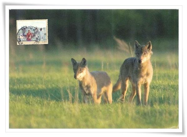 wolves_EE1.jpg