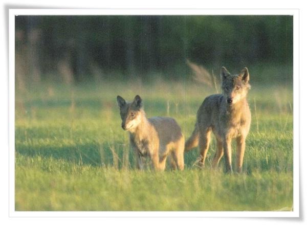 wolves_EE.jpg