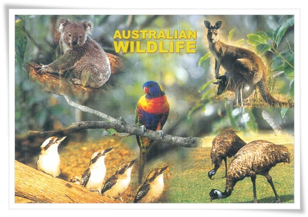 AU_wildlife.jpg