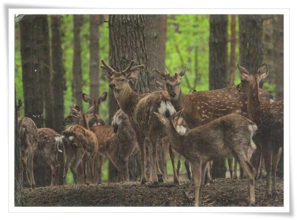 deer_RU.jpg