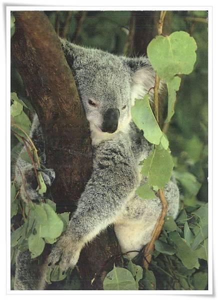 koala_DE.jpg