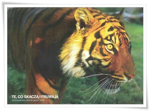tygrysy.jpg