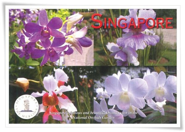 singapore orchids.jpg