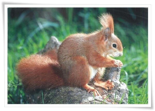 ecureuil squirel.jpg