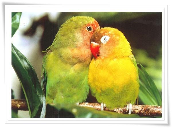 parrot_NL.jpg