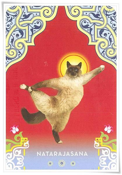 yoga cat natarajasana.jpg