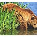 brown bear_DE.jpg