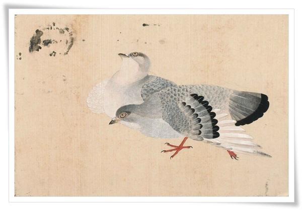 鴿譜 鴿寄佳音.jpg
