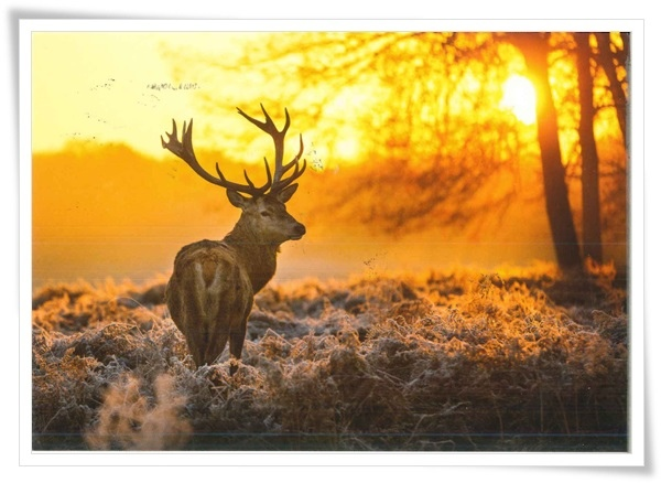 deer_ru