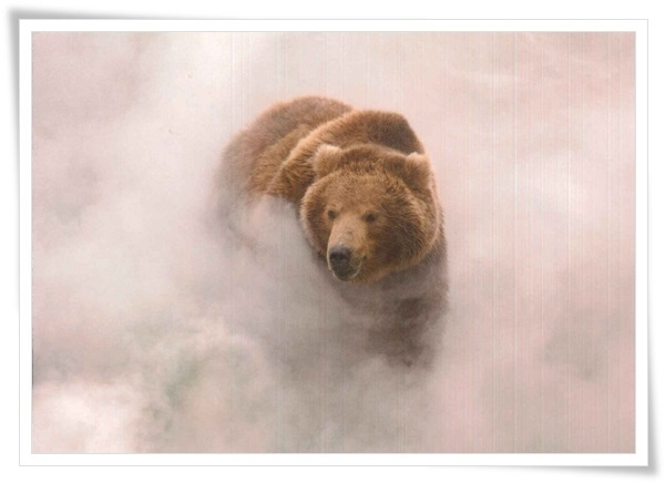 a brown bear in valley of the geysers_RU.jpg