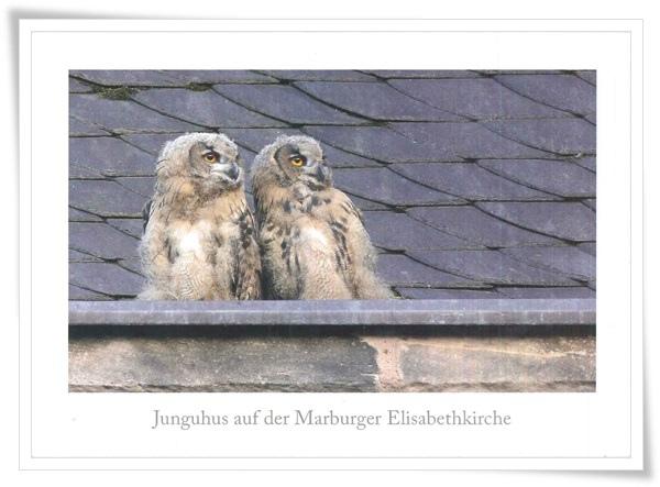 junguhus auf der marburger elisabethkirche.jpg