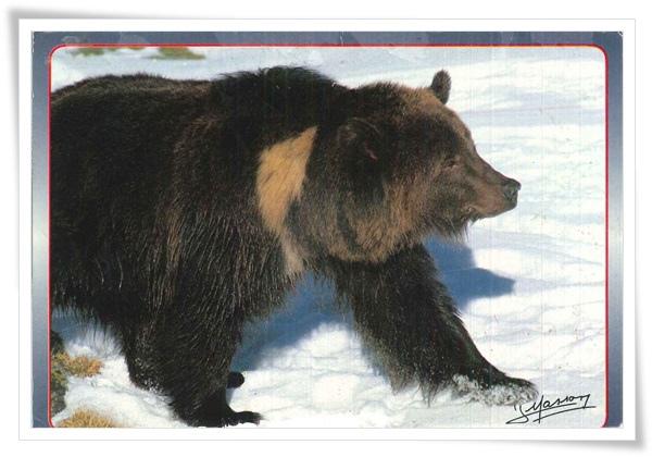 bear_FR.jpg