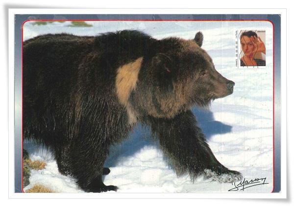 bear_FR1.jpg