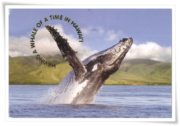 breaching whale.jpg
