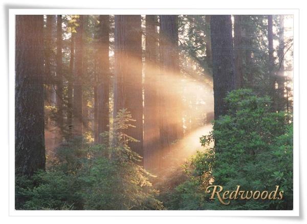 redwood national state parks.jpg