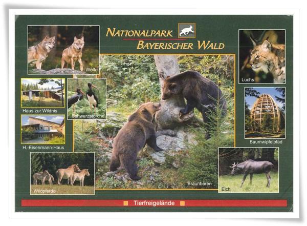 nationalpark bayerischer wald.jpg