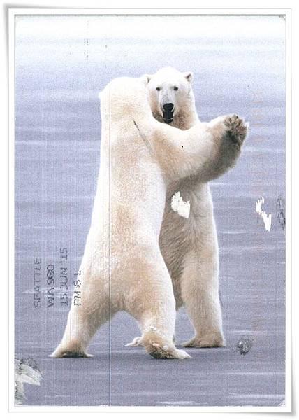 two polar bears.jpg
