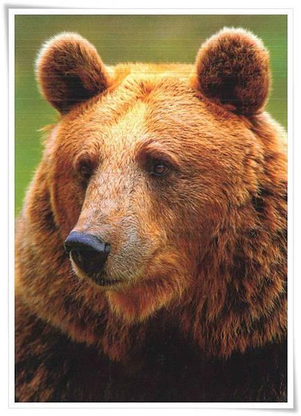 kodia bear.jpg