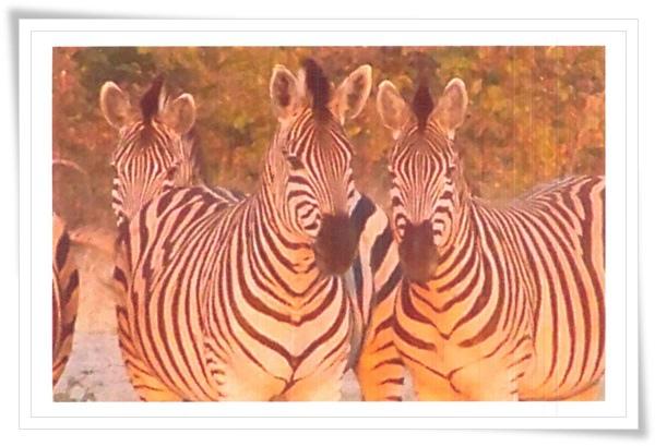 zebra_DE.jpg