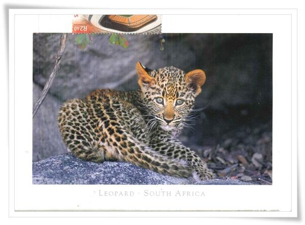 leopard south africa.jpg