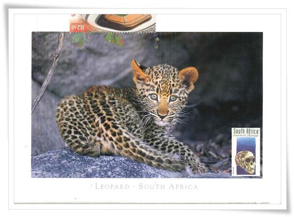 leopard south africa1.jpg