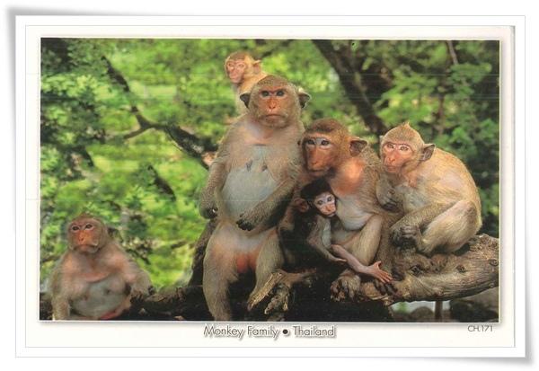 monkey family.jpg