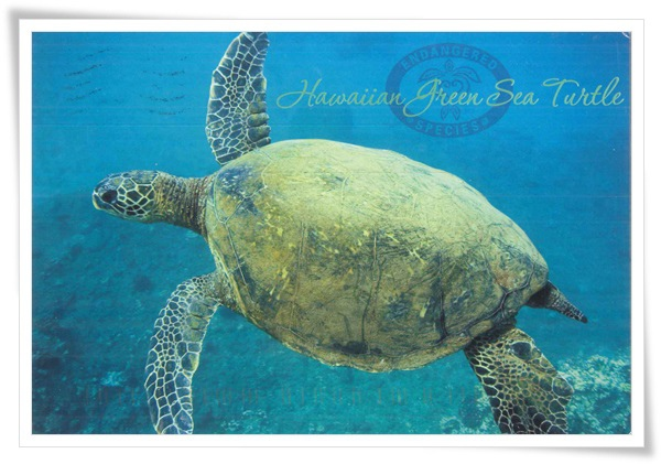 the hawaiian green sea turtle.jpg