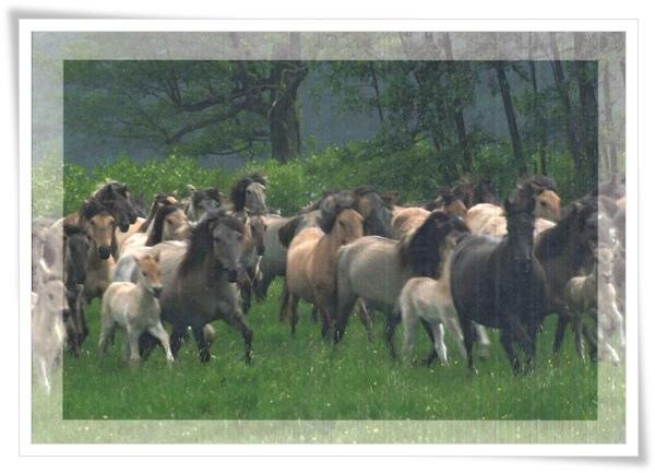 horses_DE.jpg