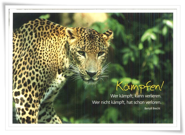 wild animal_leopard.jpg